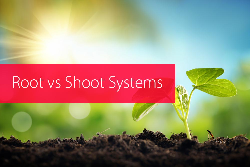 root vs shoot systems